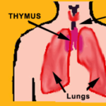 healthy breathing patterns
